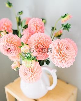 大丽花,花朵,鲜花