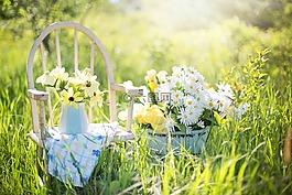 夏天静物,雏菊,黄色