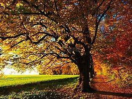 樹,大道,背光