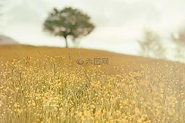 原野,草甸,自然