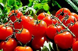 蕃茄,红色,食品