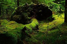 森林,莫斯,挪威