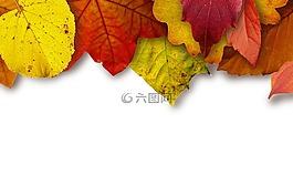 叶子,丰富多彩,颜色