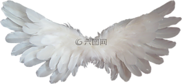 白,天使,翅膀