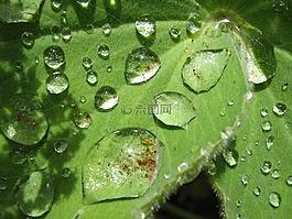 一滴水,厂,叶子