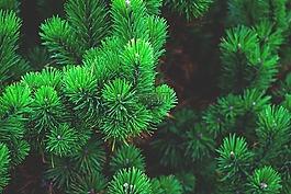 松,厂,树