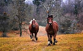 马,性质,动物