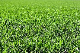 草地,字段,绿色