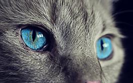 猫,动物,猫的眼睛
