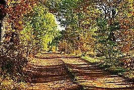 秋季,離,樹木