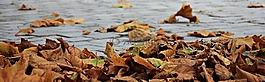 秋季,葉子,金色的秋天
