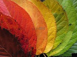 秋天的树叶,秋天树叶,多彩