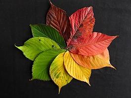 秋天的树叶,秋天树叶,秋