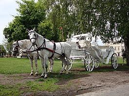 馬,動物,貴妃