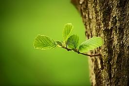 樹木,葉子,性質