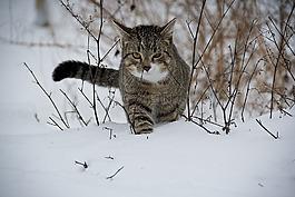 貓,動物,雪