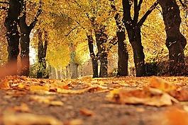 樹木,大道,秋季