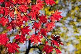 秋季,秋天的树叶,道峰