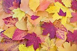 秋天的树叶,多彩的树叶,秋天树叶
