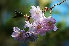 春天的花朵,树,性质