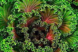 植物,甜菜,芥兰