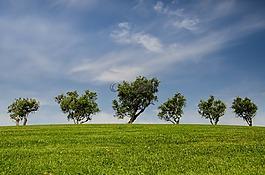 樹,小山,綠色