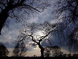 樹木,戲劇性的天空,背光