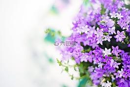 紫色的花朵,春,夏天
