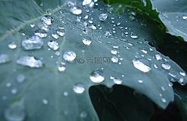 厂,蔬菜,一滴水