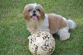 西施,動物,球
