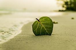 海滩,叶,绿色