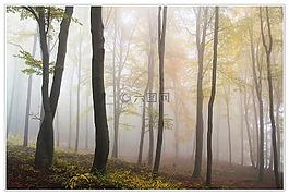 秋季,霧,森林