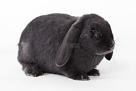 兔子,复活节兔子,家里mazlík