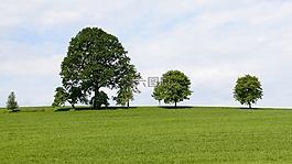樹木,格羅夫的樹木,草地