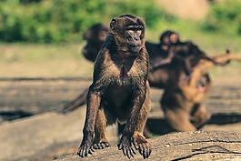 猴子,动物园,动物世界