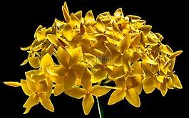 开花,花,黄色