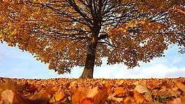 秋,树,秋天