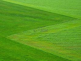 草地,绿色,草