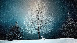 冬天,寒冬,雪