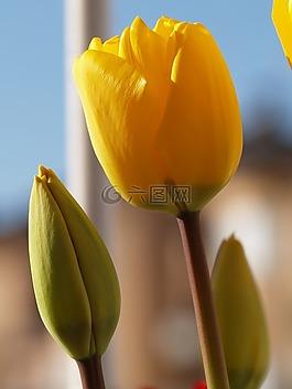 植物,黃色,花