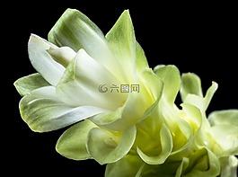花,開花,白