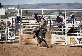 羅德奧,牛仔,公牛