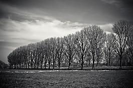 景观,梅多兰兹,树木