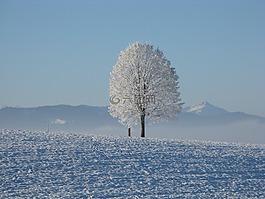 冬天,雪,白