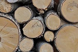 木,性質,干