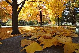 秋,感恩,万圣节