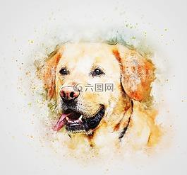 狗,宠物,拉布拉多