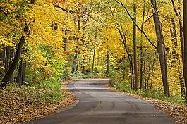 秋天,金,叶子