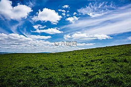 綠色,草,原野