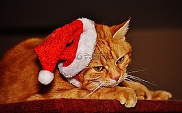 猫,宿醉,红色